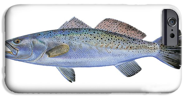 Wild Trout iPhone Cases - Speckled Trout iPhone Case by Carey Chen