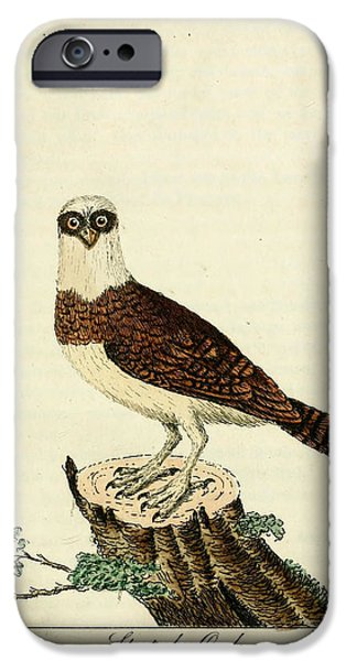 Dentist Drawings iPhone Cases - Spectacled Owl iPhone Case by Unknown Artist