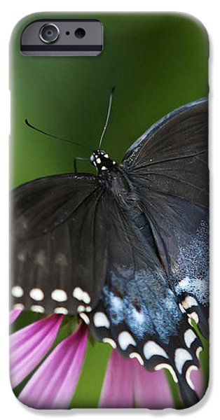 Spice Of Life Butterfly iPhone Case by Christina Rollo
