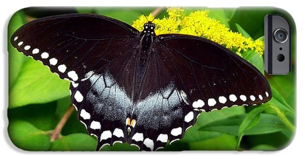 Snake iPhone Cases - Spicebush Butterfly iPhone Case by Christina Rollo