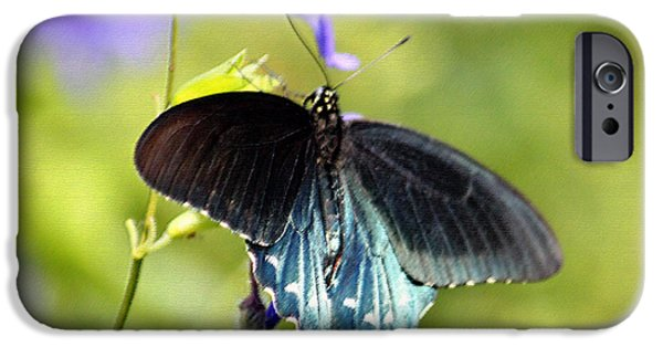 Blue Swallowtail iPhone Cases - Spicebush Swallowtail Butterfly in Pastel iPhone Case by Suzanne Gaff