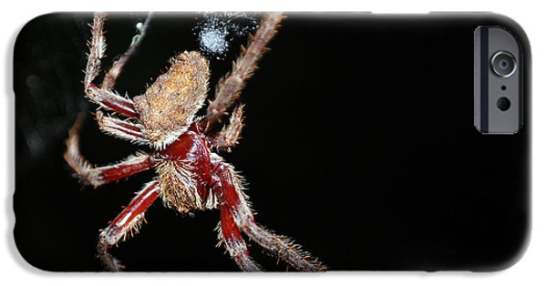 Creepy Pyrography iPhone Cases - Spider in the night iPhone Case by Evil Shadows