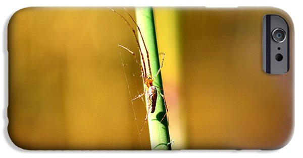 Copy Mixed Media iPhone Cases - Spider in the reeds  iPhone Case by Toppart Sweden