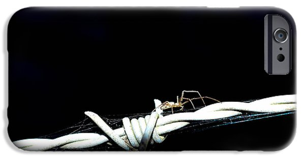 Arachnida iPhone Cases - Spider on barb wire iPhone Case by Toppart Sweden