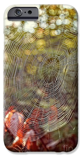 Morning iPhone Cases - Spider Web iPhone Case by Edward Fielding
