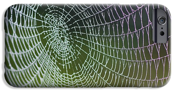 Zoologic iPhone Cases - Spider Web iPhone Case by Heiko Koehrer-Wagner