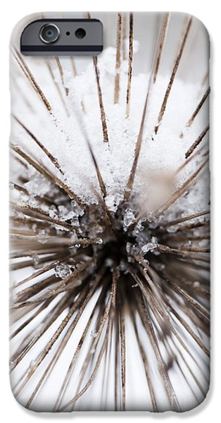 Allium Hollandicum iPhone Cases - Spikes and Ice iPhone Case by Anne Gilbert