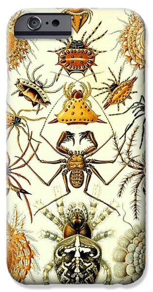 Arachnida iPhone Cases - Spin Arachnids Insect Haeckel Arachnida Araneae iPhone Case by Movie Poster Prints