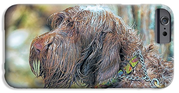 Bestfriend iPhone Cases - Spinone Italiano Italian Wire haired Pointer iPhone Case by Constantine Gregory