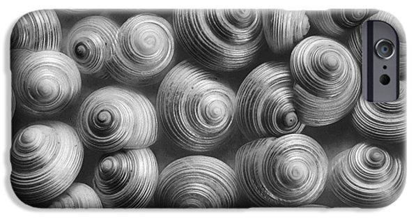 Sea Animals iPhone Cases - Spirals Black And White iPhone Case by Priska Wettstein