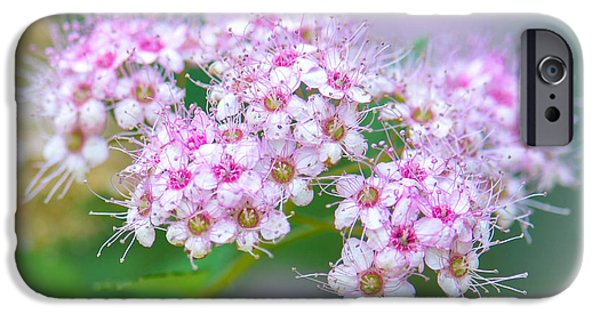 Spirea iPhone Cases - Spirea Blossoms iPhone Case by Amy Porter