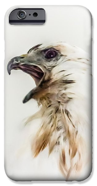 Spirit Hawk iPhone Cases - Spirit Hawk iPhone Case by Dazz Lee Photography