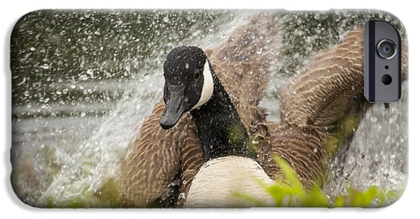 Geese iPhone Cases - Splishing And Splashing iPhone Case by Karol  Livote