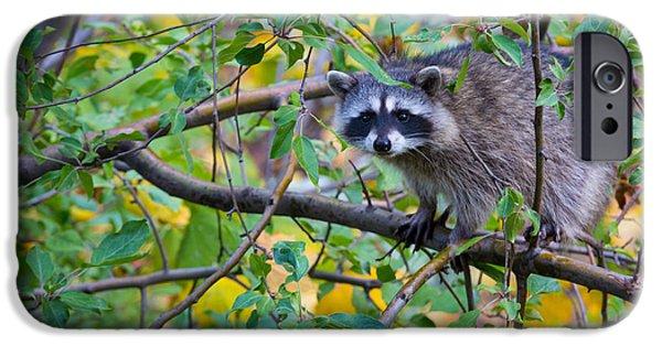 Spokane iPhone Cases - Spokane Raccoon iPhone Case by Inge Johnsson