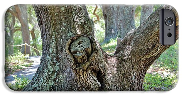 Creepy iPhone Cases - Spooky Face In A Tree iPhone Case by Cynthia Guinn