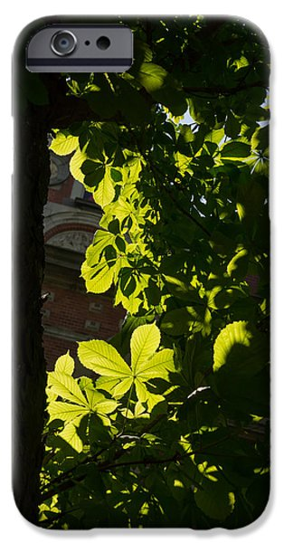 Limelight iPhone Cases - Spotlight on a Spring Green Chestnut Tree iPhone Case by Georgia Mizuleva