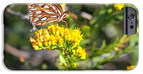 Buterfly iPhone Cases - Spotted Gulf Fritillary iPhone Case by Adam Jewell