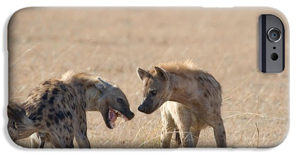 Hierarchy iPhone Cases - Spotted Hyenas At Wildebeest Kill iPhone Case by Gregory G. Dimijian, M.D.