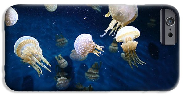 Jelly Fish iPhone Cases - Spotted Jelly Fish 5D24951 iPhone Case by Wingsdomain Art and Photography