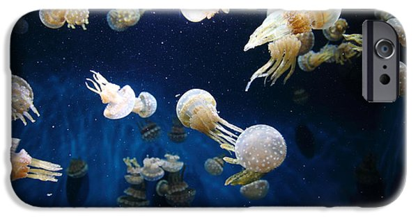 Jelly Fish iPhone Cases - Spotted Jelly Fish 5D24952 iPhone Case by Wingsdomain Art and Photography