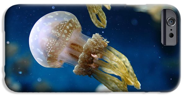 Jelly Fish iPhone Cases - Spotted Jelly Fish 5D24955 iPhone Case by Wingsdomain Art and Photography