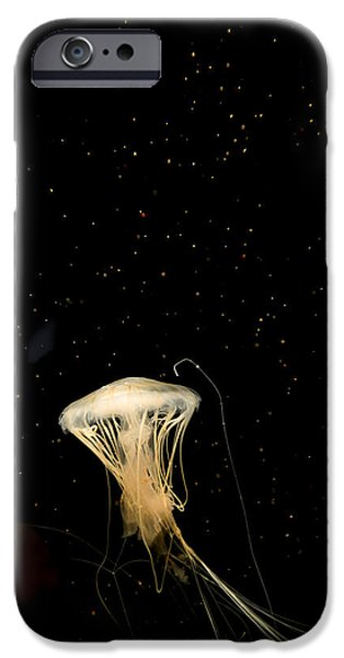 No People Pyrography iPhone Cases - Mushroom Jellyfish iPhone Case by Jason  Choy