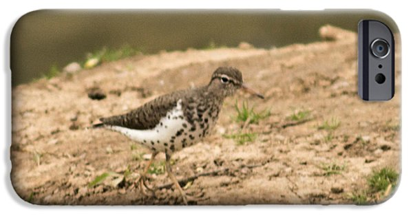 West Fork iPhone Cases - Spotted Sandpiper iPhone Case by Howard Tenke