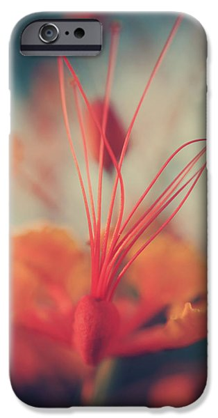 Stamen iPhone Cases - Spread the Love iPhone Case by Laurie Search