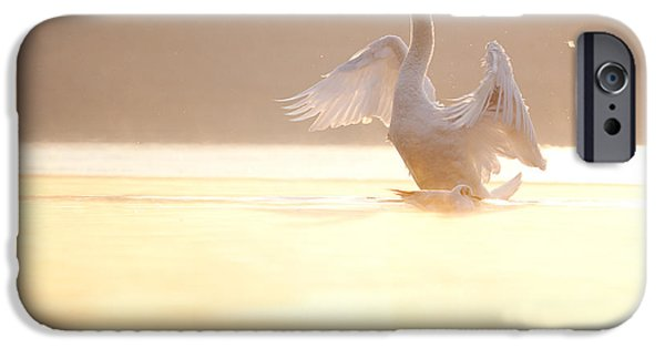 Swans... iPhone Cases - Spread Your Wings iPhone Case by Daniel Zrno