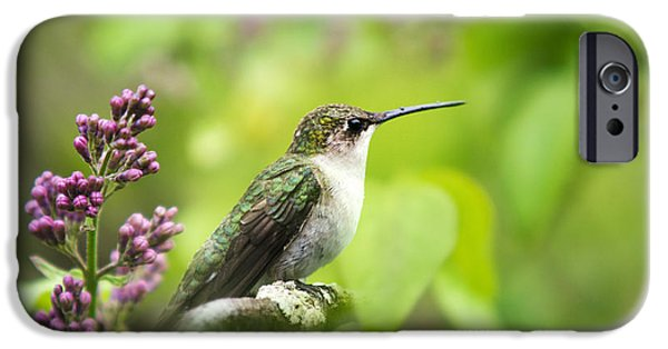 Hummingbird iPhone Cases - Spring Beauty Ruby Throat Hummingbird iPhone Case by Christina Rollo