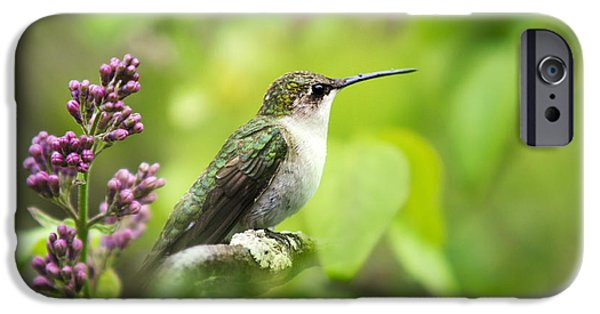 Archilochus Colubris iPhone Cases - Spring Beauty Ruby Throat Hummingbird iPhone Case by Christina Rollo