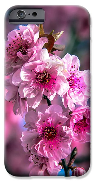 Fukushima iPhone Cases - Spring Blossoms iPhone Case by Robert Bales