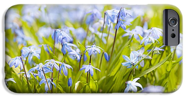 Meadow Photographs iPhone Cases - Spring blue flowers iPhone Case by Elena Elisseeva