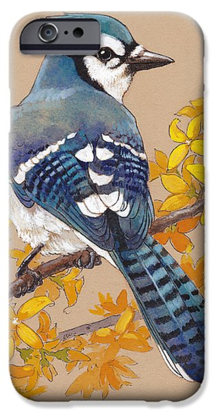 Blue Jay iPhone Cases - Spring Blue Jay 3 iPhone Case by Tracie Thompson