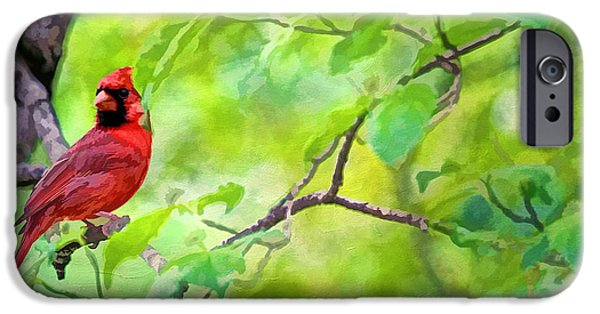 Cute Tree Images iPhone Cases - Spring Cardinal iPhone Case by Darren Fisher