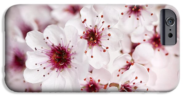 Floral Photographs iPhone Cases - Spring cherry blossom iPhone Case by Elena Elisseeva
