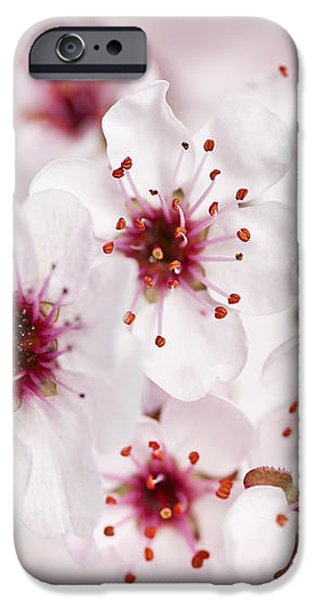 Spring cherry blossom iPhone Case by Elena Elisseeva