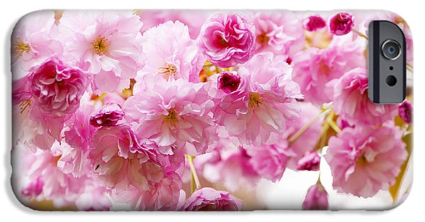 Cherry Blossoms Photographs iPhone Cases - Spring cherry blossoms  iPhone Case by Elena Elisseeva