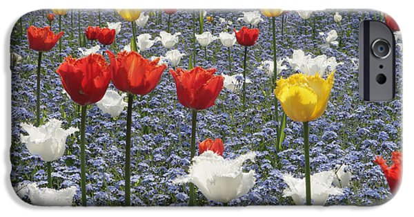 Swindon iPhone Cases - Spring  Colour iPhone Case by Paul Felix