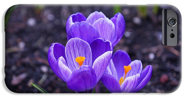 Daughter Gift iPhone Cases - Spring Crocus Flowers Art Prints Floral iPhone Case by Baslee Troutman Spring Art Prints