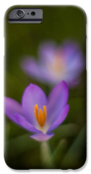 Poetic Photographs iPhone Cases - Spring Crocus Glow iPhone Case by Mike Reid