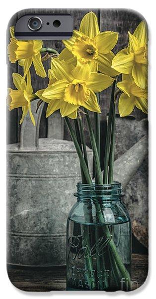 Spring Daffodil Flowers iPhone Case by Edward Fielding