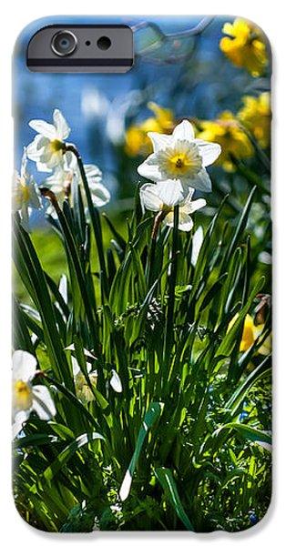 Spring Daffodils 1. Park Keukenhof iPhone Case by Jenny Rainbow