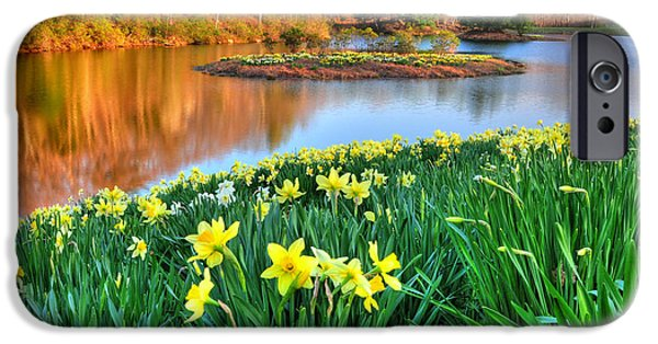 Litchfield County Landscape iPhone Cases - Spring Daffodils at Laurel Ridge-Connecticut  iPhone Case by Thomas Schoeller