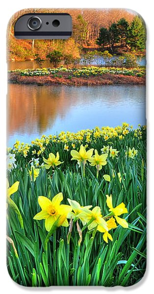 Spring Daffodils at Laurel Ridge-Connecticut  iPhone Case by Thomas Schoeller