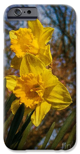 Spring Daffodils  iPhone Case by Brian Roscorla