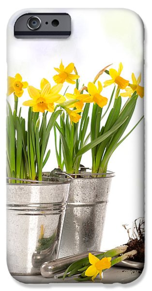 Work Tool iPhone Cases - Spring Daffodils iPhone Case by Amanda And Christopher Elwell
