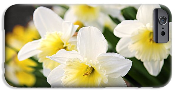 Forest Detail iPhone Cases - Spring Daffodils iPhone Case by Elena Elisseeva