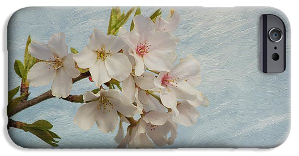 Cherry Blossoms iPhone Cases - Spring Delight iPhone Case by Kim Hojnacki