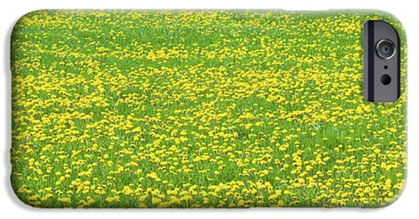Maine Farms iPhone Cases - Spring Farm Panorama With Dandelion Bloom in Maine Canvas Poster Print iPhone Case by Keith Webber Jr